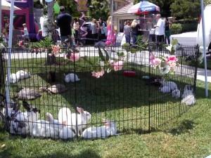 Beautiful bunny zoo (2)